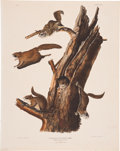 Antiques:Posters & Prints, John James Audubon (1785-1851). Pteromys Volucella - Plate XII(Bowen Edition).. Lithograph of the playful Common Flying S...