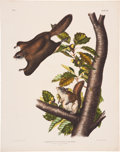 Antiques:Posters & Prints, John James Audubon. Pteromys Origonensis - Plate XV (BowenEdition). Hand-colored lithograph, not dated, from the imperialf...