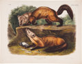 Antiques:Posters & Prints, John James Audubon. Mustela Martes - Plate CXXXVIII (BowenEdition). Hand-colored lithograph dated 1848, from the imperialf...
