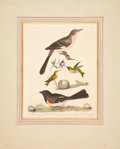 Antiques:Posters & Prints, Alexander Wilson. Mocking Bird; Egg; Male and Female Humming Bird, Nest and Eggs; Towhé Bunting; Egg. Hand-colored etching f...