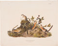 Antiques:Posters & Prints, John James Audubon. Tamias Quadrivittatus - Plate XXIV (BowenEdition). Hand-colored lithograph dated 1843, from the imperia...