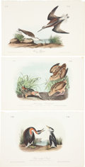 Antiques:Posters & Prints, John James Audubon. Three Plates from The Birds of America,Octavo Edition. [Including:] 'American Woodcock,' pl... (Total: 3Items)
