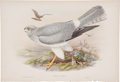 Antiques:Posters & Prints, John Gould (1804-1881). Circus Cyaneus. Beautiful hand-colored lithograph from Gould's Birds of Great Britain (London: 1...