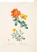 Antiques:Posters & Prints, Pierre Joseph Redouté (1759-1840) and Pancrace Bessa (1772-1835).... (Total: 5 Items)