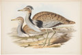 Antiques:Posters & Prints, John Gould (1804-1881). Two Prints: Otis Macqueeni. [and:] LittleBustard.. ... (Total: 2 Items)