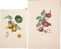 Antiques:Posters & Prints, Pierre-Antoine Poiteau (1766-1854) and Pierre Jean Francois Turpin(1775-1840). Four Prints: Abricot commun. [and:] Robert... (Total:4 Items)