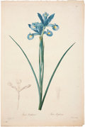 Antiques:Posters & Prints, Pierre-Joseph Redouté (1759-1840). Two Prints: Iris Xiphium. [and:]Iris Virescens.. ... (Total: 2 Items)