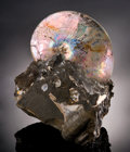 Fossils:Cepholopoda, AMMONITE WITH MOTHER-OF-PEARL. ...