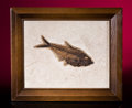 Fossils:Fish, FRAMED FOSSIL HERRING. ...