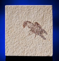 Fossils:Fish, FOSSIL CRAYFISH. ...