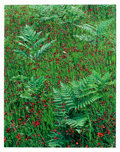 Photographs:Contemporary, ELIOT FURNESS PORTER (American, 1901-1990). Bracken andHawkweed, Seney, Michigan, July 2, 1973, from Certain PassagesPor...