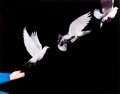 Photographs, HAROLD EUGENE EDGERTON (American, 1903-1990) . Pigeon Released, 1965. Dye-transfer, circa 1980. Paper: 16 x 20 inches (4...