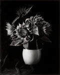 Photographs, PAUL CAPONIGRO (American, b. 1932). Sunflowers, 1989. Gelatin silver, 1992. 12 x 9-3/4 inches (30.5 x 24.8 cm). Edition:...