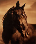 Photographs:20th Century, MICHAEL EASTMAN (American, b. 1947). Horse #171, circa 2000.Ink-jet, printed later. Paper: 44-1/2 x 36-1/2 inches (113 ...