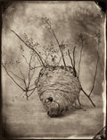 Photographs:20th Century, TOM BARIL (American, b. 1952). Hornet's Nest, 2002.Ambrotype, printed later. 23 x 18 inches (58.4 x 45.7 cm). Edition:...