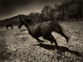 Photographs:Contemporary, MICHAEL EASTMAN (American, b. 1947). Horse #25, circa 2000.Ink-jet, printed later. Paper: 35-1/2 x 44 inches (90.1 x 11...