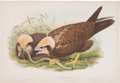 Books:Natural History Books & Prints, John Gould. Circus Æruginosus. Marsh Harrier. [London: ca. 1865]. One hand-colored plate of the Harrier, with accomp... (Total: 2 Items)
