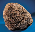 Fossils:Paleobotany (Plants), FOSSIL CYCAD. ...