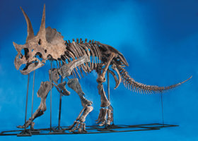 Featured item image of A VIRTUALLY COMPLETE AND IMPORTANT TRICERATOPS SKELETON  ...