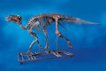 Fossils:Dinosauria, COMPLETE MOUNTED DUCK-BILLED DINOSAUR SKELETON. ...