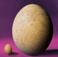 "RARE COMPLETE ""GREAT ELEPHANT BIRD EGG"" WITH UNIQUE EMBRYONIC BONES"