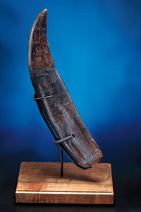 EXCEPTIONAL TYRANNOSAURUS-REX TOOTH WITH ROOT