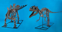THE FIGHTING PAIR - ALLOSAURUS VS STEGOSAURUS