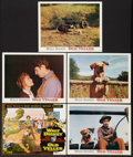 "Movie Posters:Adventure, Old Yeller/The Incredible Journey Combo (Buena Vista, R-1974).Lobby Card Set of 10 (11"" X 14""). Adventure.. ... (Total: 10 Items)"