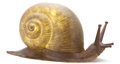 Lighting:Lamps, AN AMERICAN CAST FIBERGLASS SNAIL-FORM LAMP . Tony Duquette, Los Angeles, California, circa 1960. Unmarked. 18 x 37 x 15 inc... (Total: 2 Items)