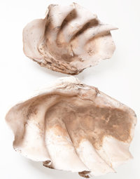 THE COLLECTION OF PAUL GREGORY AND JANET GAYNOR  GIANT CLAM SHELL TRIDACNA GIGAS