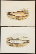 Books:Prints & Leaves, A. F. Lydon, artist. Two Attractive Chromolithograph Plates of FishDepicting the Lochleven and Common Trout Varieties From... (Total:2 Items)