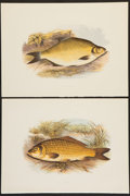 Books:Prints & Leaves, A. F. Lydon, artist. Two Superb Chromolithograph Plates of FishDepicting the Carp and Common Bream Varieties From Briti...(Total: 2 Items)