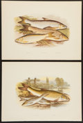 Books:Prints & Leaves, A. F. Lydon, artist. Two Handsome Chromolithograph Plates of FishDepicting Barbel, Gudgeon, Gwyniad, Grayling, and Venda... (Total:2 Items)