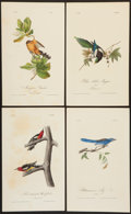 Books:Natural History Books & Prints, James Audubon. Four Hand-Colored Audubon Plates: Mangrove Cuckoo,Red-Breasted Woodpecker, Yellow-Billed Magpie and Ultramarin...(Total: 4 Items)