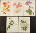 Books:Prints & Leaves, Five Splendid Hand-Colored Botanical Prints of Various Flowers.Trivial toning at the margins, else the images remain bright...(Total: 5 Items)