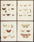 Books:Prints & Leaves, Four Entomological Color Lithograph Prints From Agriculture ofNew York. Albany: C. Van Benthuysen, 1854 by Dr.... (Total: 4Items)