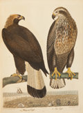 Books:Natural History Books & Prints, Alexander Wilson. American Ornithology; or, the Natural Historyof the Birds of the United States. Plates. Engra...