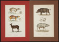 Antiques:Posters & Prints, George Cuvier. Four Stunning Hand-Colored, Engraved Plates fromLe Règne Animal. [Paris: ca. 1840]. Images inclu... (Total:4 Items)