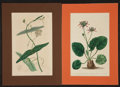 Antiques:Posters & Prints, Four Lovely Hand-Colored Floral Prints from The BotanicalRegister and others. [London: ca. 1830]. General mild ...(Total: 4 Items)