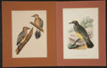 Antiques:Posters & Prints, Spencer Fullerton Baird. Four Hand-Colored Lithographs fromUnited States and Mexican Boundary Survey and U.S. Sur...(Total: 4 Items)