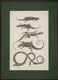 Antiques:Posters & Prints, Two Engraved Herpetological Prints. [ca. 1850]. Stunning images oflizards and snakes. Mild dampstaining with some chipping ...(Total: 2 Items)