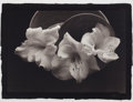 Photographs:20th Century, KENRO IZU (American/Japanese, b. 1949). Still Life #61,1987. Platinum-palladium, 1993. Paper: 16-3/4 x 21-3/4 inches (4...