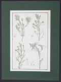 Antiques:Posters & Prints, Two Large Engraved Prints of Plants.... (Total: 2 Items)