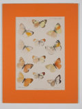 Antiques:Posters & Prints, Four Hand-Colored Prints of Lepidoptera (Moths).... (Total: 4Items)
