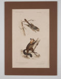Antiques:Posters & Prints, George Cuvier. Four Hand-Colored Prints of Small Mammals. EngravedPlates from Le Regne Animal.... (Total: 4 Items)