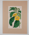 Antiques:Posters & Prints, William Curtis. Four Lovely Hand-Colored Botanical Plates from The Botanical Magazine.... (Total: 4 Items)