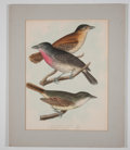 Antiques:Posters & Prints, Spencer Fullerton Baird. Four Beautiful Hand-Colored Prints ofBirds from Birds of the Boundary.... (Total: 4 Items)