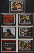"""Movie Posters:Documentary, The Animal World (Warner Brothers, 1956). Title Lobby Card (11"""" X 14"""") and Lobby Cards (6) (11"""" X 14""""). Documentary. Directe... (Total: 7 Items)"""