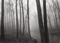 Photographs:20th Century, PAUL CAPONIGRO (American, b. 1932). Fog and Trees, Redding,1968. Gelatin silver, 1992. 9-1/4 x 13-1/4 inches (23.5 x 33...