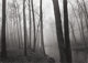PAUL CAPONIGRO (American, b. 1932) Fog and Trees, Redding, 1968 Gelatin silver, 1992 9-1/4 x 13-1/4 inches (23.5 x 33